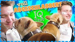 Von Hunde abgeschleckt - BESTRAFUNG | Mindfuck-Challenge | IQ-TEST