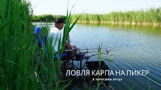 Ловля пикером на пруду