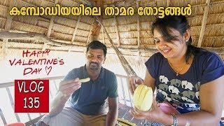 കമ്പോഡിയയിലെ താമര തോട്ടങ്ങളുടെ കാഴ്ചകളും ,വിശേഷങ്ങളും | Lotus Farm Cambodia  Siem Reap