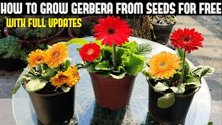 How To Grow Gerbera From Seeds For Free | FULL INFORMATION