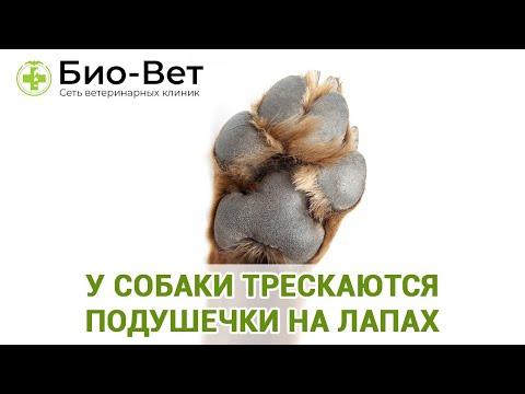 У собаки трескаются подушечки на лапах  - что делать?