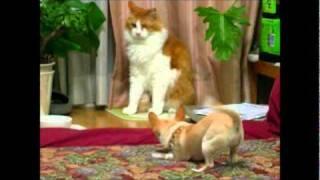 お手猫迅君とチコちゃん7