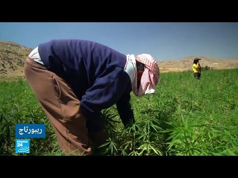 العرب اليوم - شاهد: زراعة