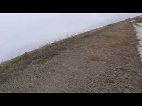 nd-spring-snow-goose-hunt-ditch-stalk