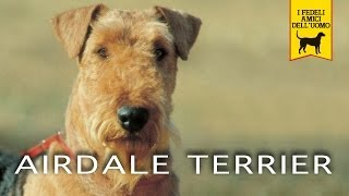 AIREDALE TERRIER Trailer