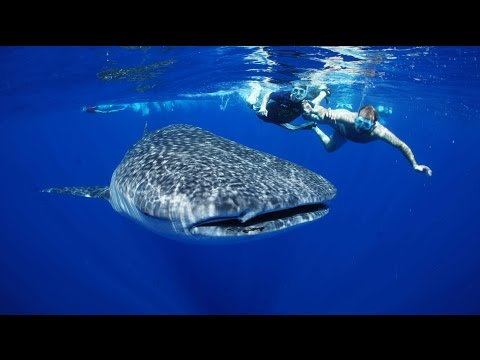 Riviera Maya Excursion: Swim with Whale Shark