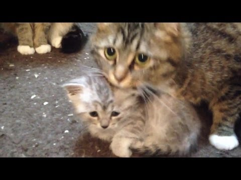 Mother cat guarding the baby cat