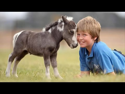 Mini Horses Are Soo Damn Cute!