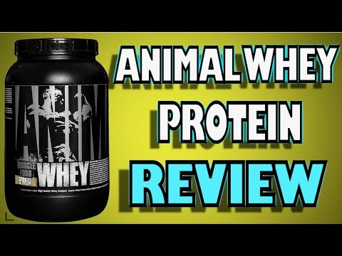 Animal Whey Protein Review By Universal Nutrition