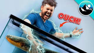 Electric Eel Shocks Me Again... AND AGAIN!