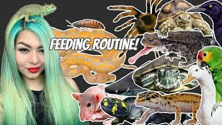 FEEDING 100 OF MY PETS! (what do I feed to so many?!)