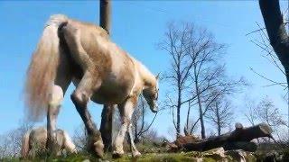 Sve o konjima