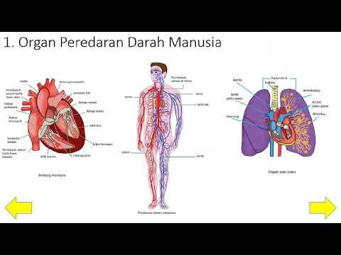 Papiloma virus uomo vaccino