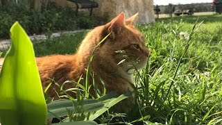 Cancer and Your Pet (PART 2 - THE CAT)  Signs and Symptoms