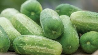 Quick Start Gardening Guide: How to Grow Cucumbers in Containers