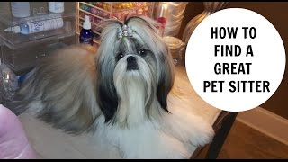 How to find a Great PET SITTER