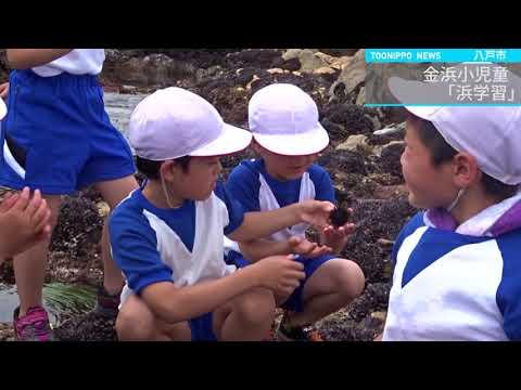 金浜小児童、ふるさとの海大切に「浜学習」