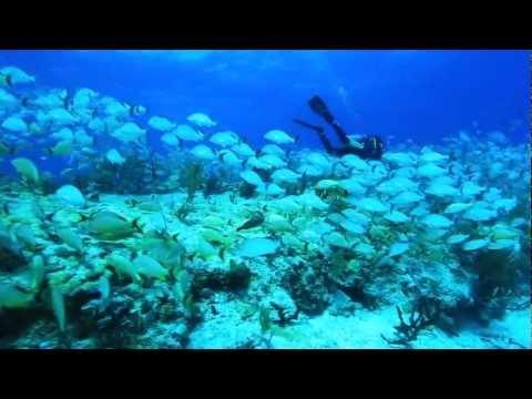 Scuba Diving @Playa del Carmen, Mexico