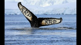 Whale Manipulation of Ripple XRP And Bitcoin