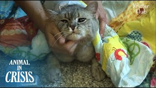 Bullied Cat's Desperate To Eat Food Waste Even If It Could Harm Her Life | Animal in Crisis EP110