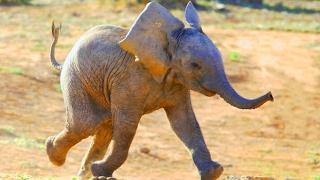 Прикольные Слоны - очень клевые!