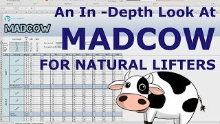 MADCOW - Intermediate Routine | For Natural Bodybuilders