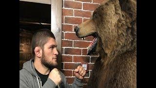 Khabib Nurmagomedov Berlatih Dengan Beruang