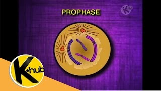 Grade 8 Science | Mitosis and Cell Cycle | K-Hub