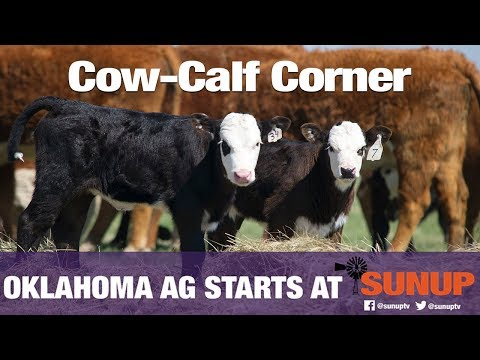 , title : 'Cow-Calf Corner - The Importance of Colostrum (12/07/19)