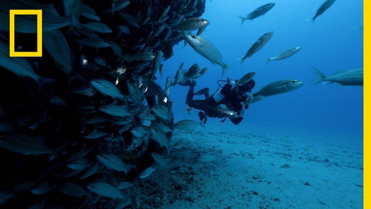 What's Driving Shark Attacks in Recife? | SharkFest thumbnail