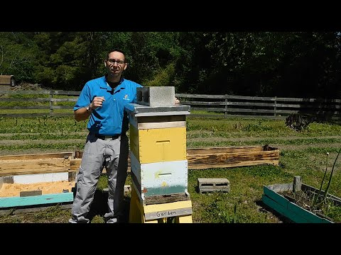 , title : 'Bee Hive Hurricane Prep | Beginner Beekeeper Episode 24