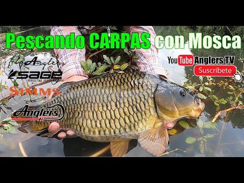 Grandes Carpas pescadas con Mosca / Carp On The Fly