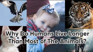 Why Do Humans Live Longer Than Most Of The Animals | GK Learner Point