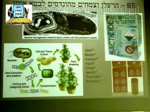 הנדסה גנטית בצמחים בישראל היום
