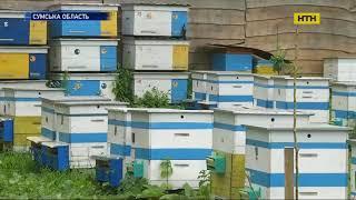 На Сумщині масово загинули бджоли