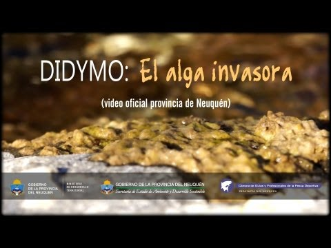 Dydimo: El alga invasora