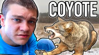 I TRAPPED A COYOTE!