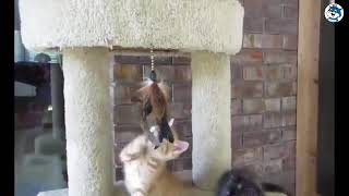 😂😂😂Приколы над котами смешные кошки 😂😂😂