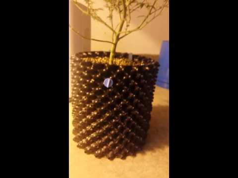 Video Root rot success!