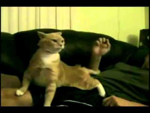 Mèo hát opera cực cool , cười sái quai hàm