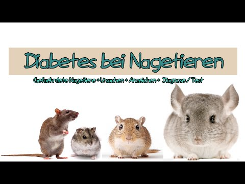 Typ-1-Diabetes-Ambulanz