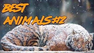 Best Animals Coub #2   Лучшие кубы с животными #2 (Ноябрь 2018)