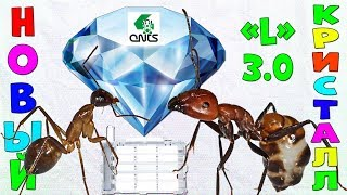 Сборка и обзор муравьиной фермы Кристалл L 3.0 от 4ants.ru