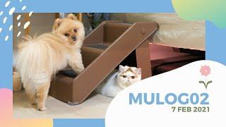 MULOG02 : ฝึกน้องมูจิขึ้นบันได 🐶