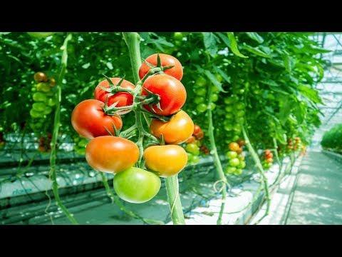 mp4 Business Plan Greenhouse Farming, download Business Plan Greenhouse Farming video klip Business Plan Greenhouse Farming