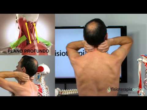 Tratamiento dolor en el cuello y los hombros - Fisioterapia Bilbao