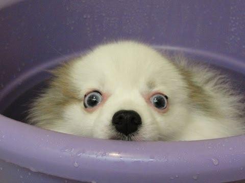 Il cagnolino ama fare il bagnetto