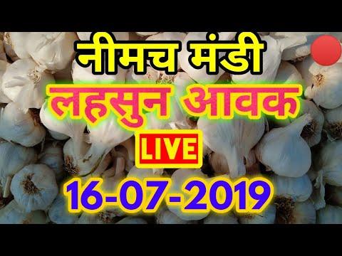 नीमच लहसुन मंडी आवके Live 16-07-2019