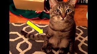 Они приютили бродячего кота, но поняв, что он не такой как все, были поражены