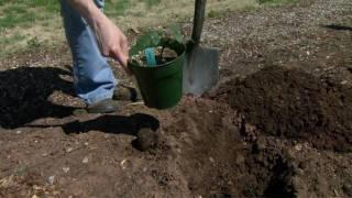 Planting Blackberries